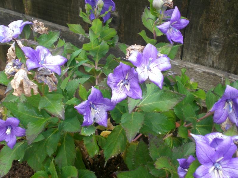 Flowering Plant Plants With Purple Flowers